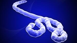 Dosen FKUI: Ebola Sulit Sampai ke Indonesia