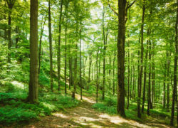 Mengapa Kita Harus Menjaga Bumi?